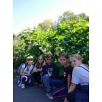 И  снова экскурсия в Ботанический сад!