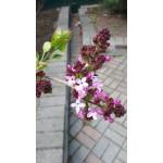 А у нас цветут каштаны....!