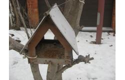 Экологическая акция «Будь другом птиц»